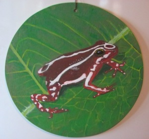 Anthony's Poison Arrow Frog-Rana Tricolor Ecuatoriana