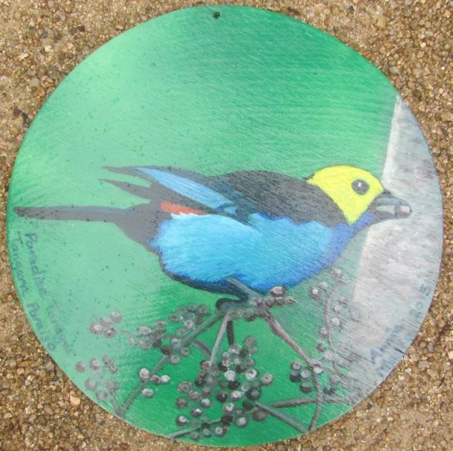 Paradise Tanager-Tanagra Paraiso
