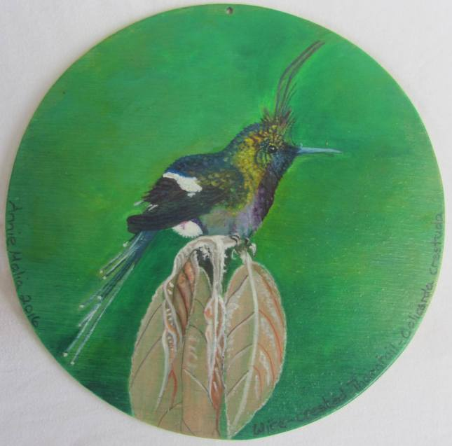 Wire-Crested Thorntail 2 (1)