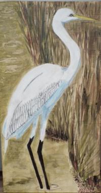 Garza grande-Great Egret
