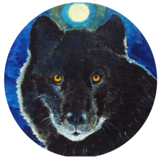 Black Wolf-Canis lupus